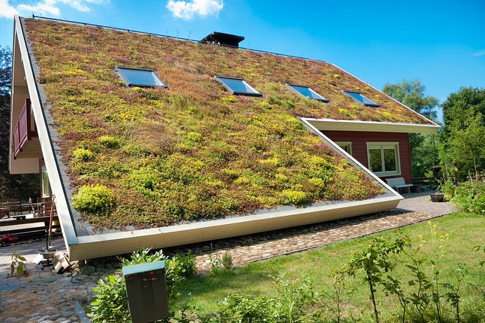 groen dak met sedum